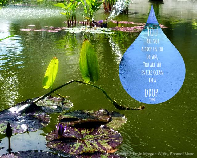 rumi- waterlilies quotes-ocean