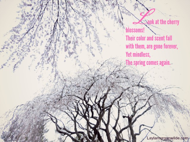 zen_poem_cherry_blossoms
