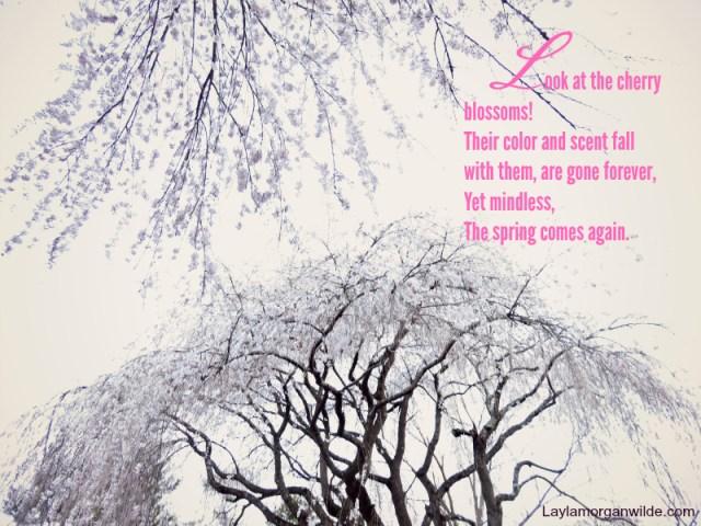 zen_poem_cherry_blossoms