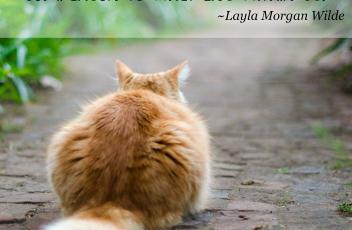 cat_quotes_motivation
