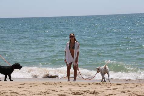 Pups On A Beach