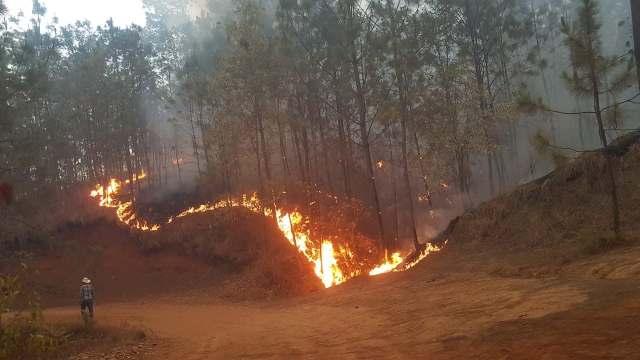 Graves daños, por el incendio forestal en Uruapan