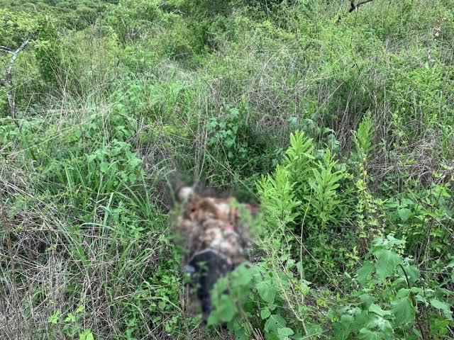 Localizan 7 cuerpos y un cráneo en los limites de Jacona y Tangancícuaro
