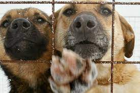 Refugio de animales usa Tinder para aumentar adopción de mascotas