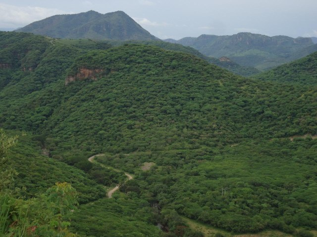 Fortalece Michoacán el marco jurídico y del reglamento de la Ley de Desarrollo Forestal Sustentable del Estado