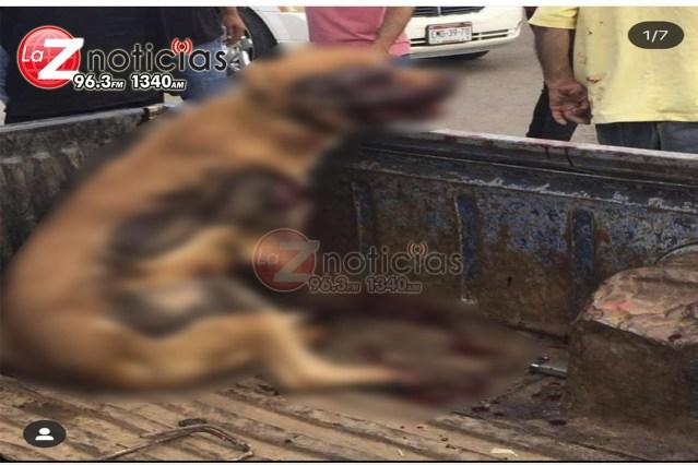 Investiga Fiscalía General posibles hechos de crueldad animal ocurridos en Tangamandapio