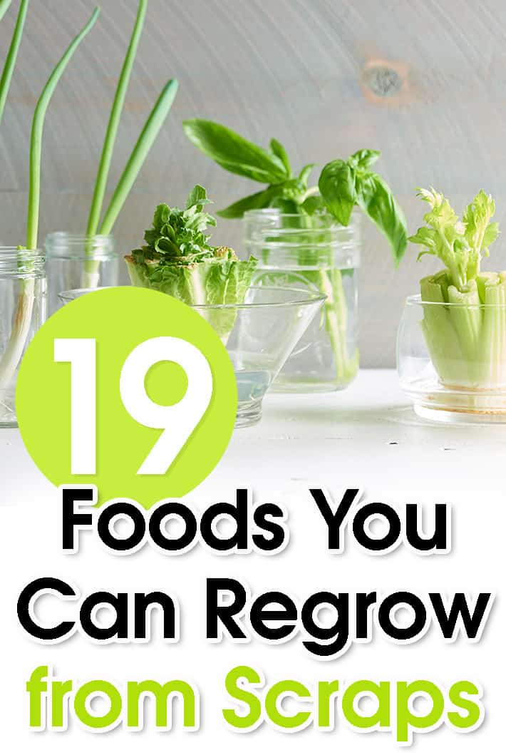 19 Foods You Can Regrow from Scraps