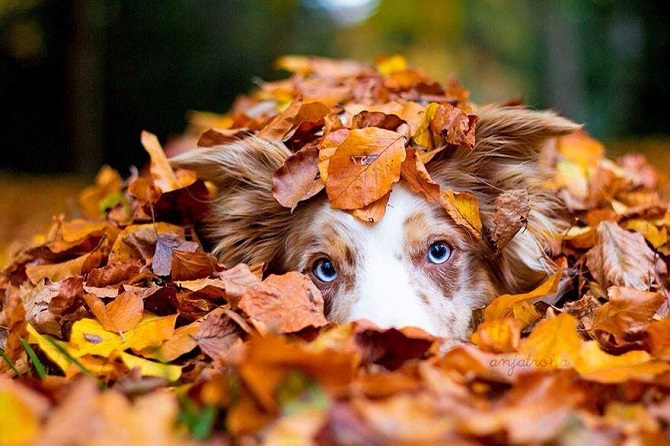 Autumn Dog, Dogs who are crazy about fall