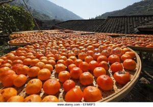 drying persimmons china