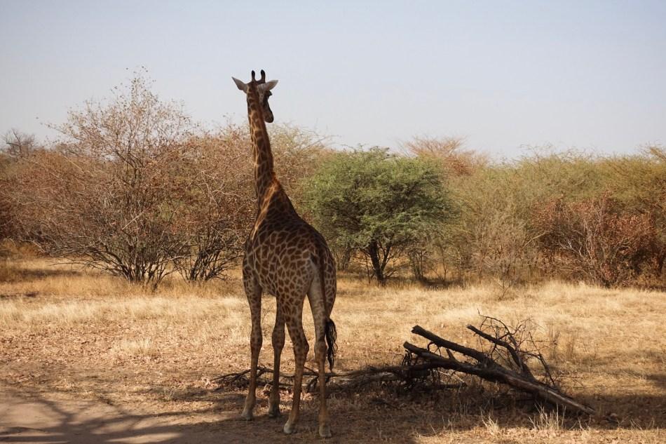 Rezerwat Bandia Senegal safari