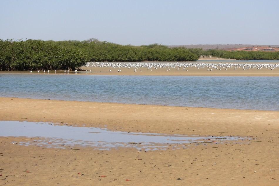 Senegal Lagune de Somone