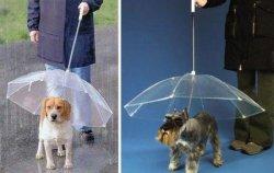 weird-umbrellas-005-450x286