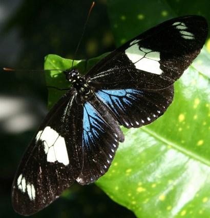 Butterfly key west