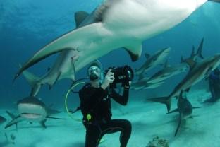 sharks2-2
