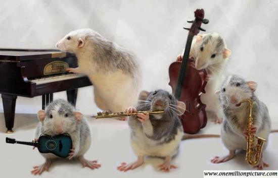 MOUSES PLAY MUSIC