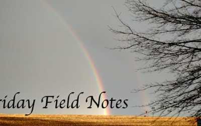 Friday Field Notes
