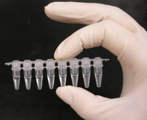 Ginagamit ang Polymerase Chain Reaction (PCR) sa pagsusuri ng COVID-19 samples. Larawan mula kay Madeleine Price Ball sa wikimedia Commons (CCO 1.0)