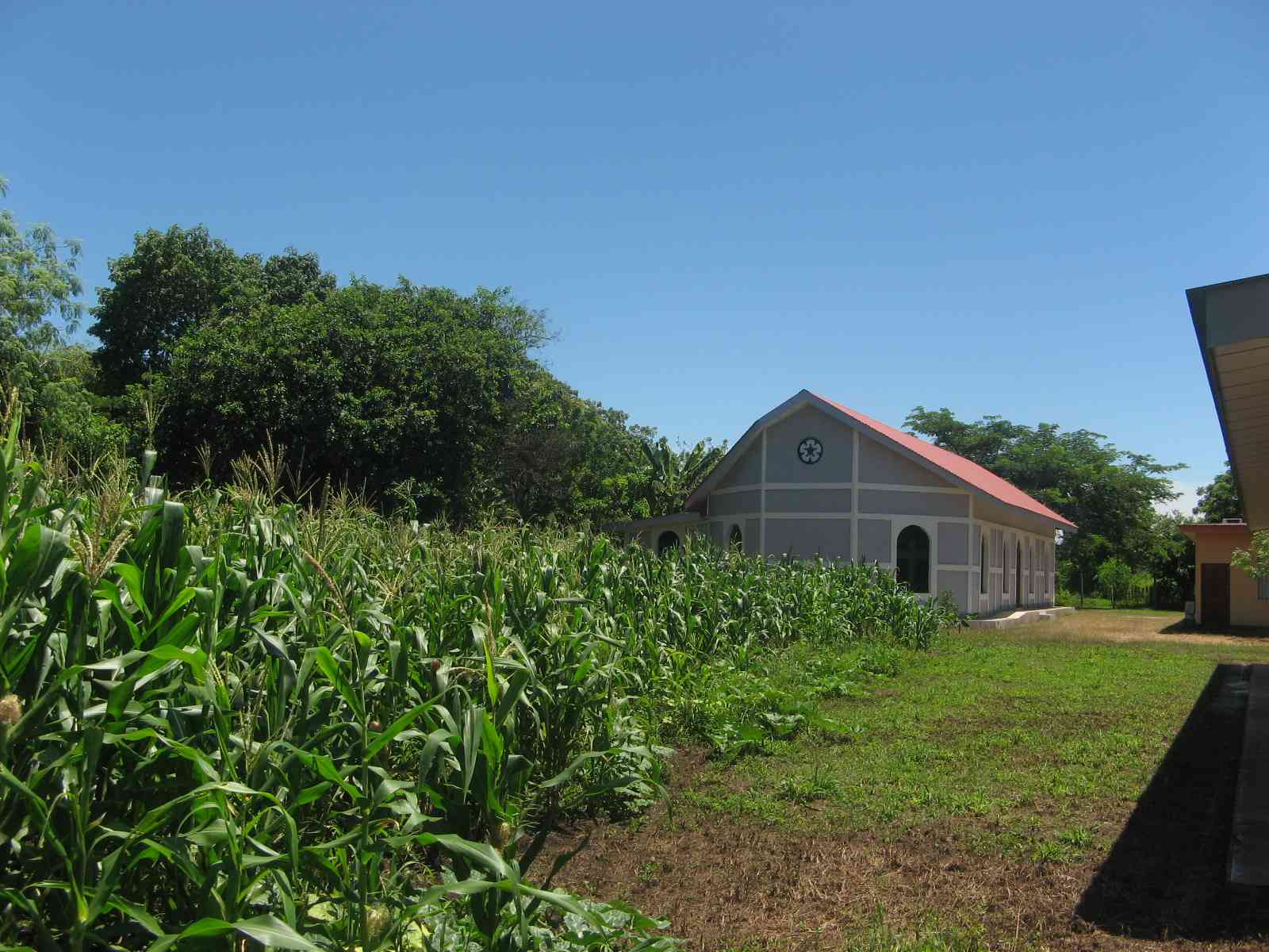 Corn fields behind the Mission Chapel