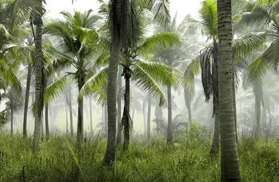 Sustainable Palm Oil Progress