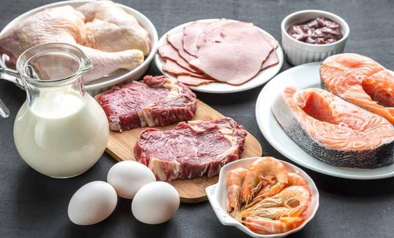 diverse surse de proteine animale