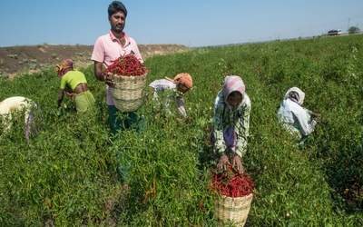 Benefits of low cost farming and how it improves life style of farmers
