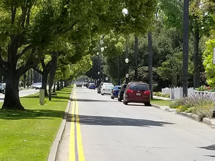 Tree lined Street in Floral Park