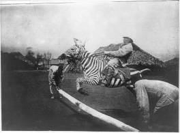 This photo, from 1890-1920, shows a man in East Africa jumping a zebra -- although the zebra doesn't look too happy about it.