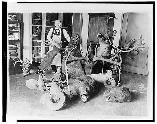 George Marshall, dean of the taxidermists at the National Museum, photographed with some of the historic White House trophies which he is at present renovating