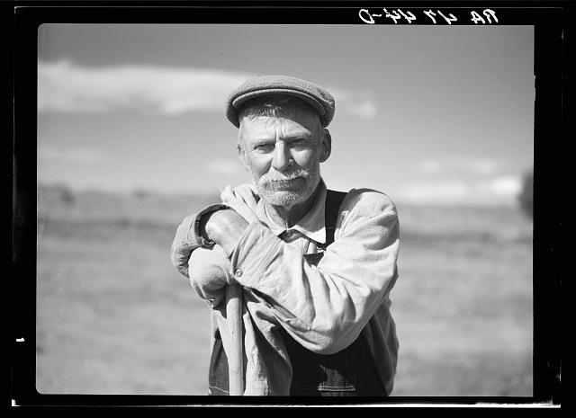 A one-armed sheep herder. Central Oregon grazing project
