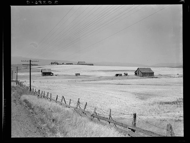 "Washington, Klickitat County, near Goldendale. Wheat country, abandoned farm in foreground, occupied farm beyond. Heard in local filling station: ""Well, heck, the large farmers are buying out the small farmers and taking over the country. The farmers have to do it in dry land farming to build their land up to where it was. The little fellows are off to the four winds."""
