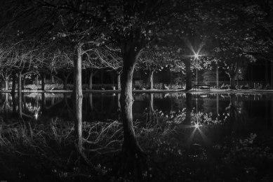 Swampy Park