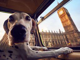Top 10 Dog Friendly London Restaurants