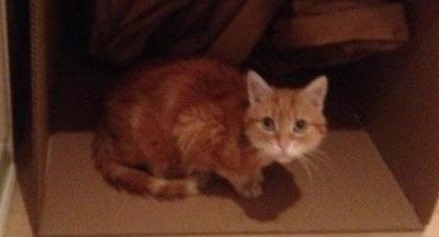 Cafrey - London Life UK's Official Cat 17