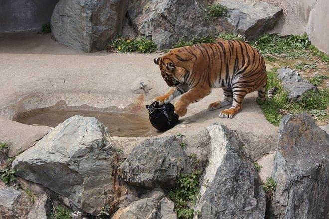 # Zoo Jeans 讓老虎、獅子當設計師:這才是真正的獸爪牛仔褲! 13