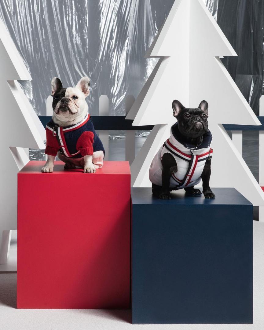 # Moncler × Poldo Dog Couture :攜手為狗兒打造高級羽絨服 6
