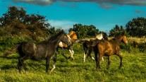 running_horses-wide_ldpfotoblog_web