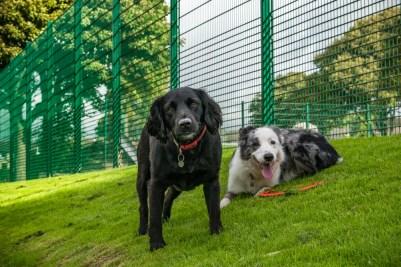 dogs_brier_park_ldpfotoblog
