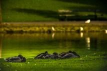 victoria_park_birds_ldpfotoblog
