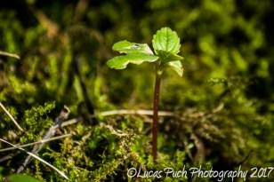 inthegrassmakro_ldpfotoblog-2