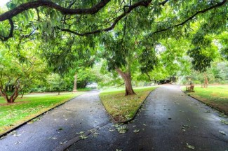 Image: Two diverging paths in a park.