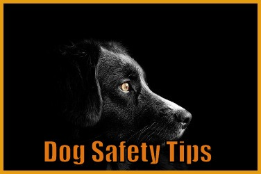 Dog Safety Tips