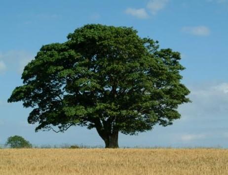 The Worry Tree (2/2)