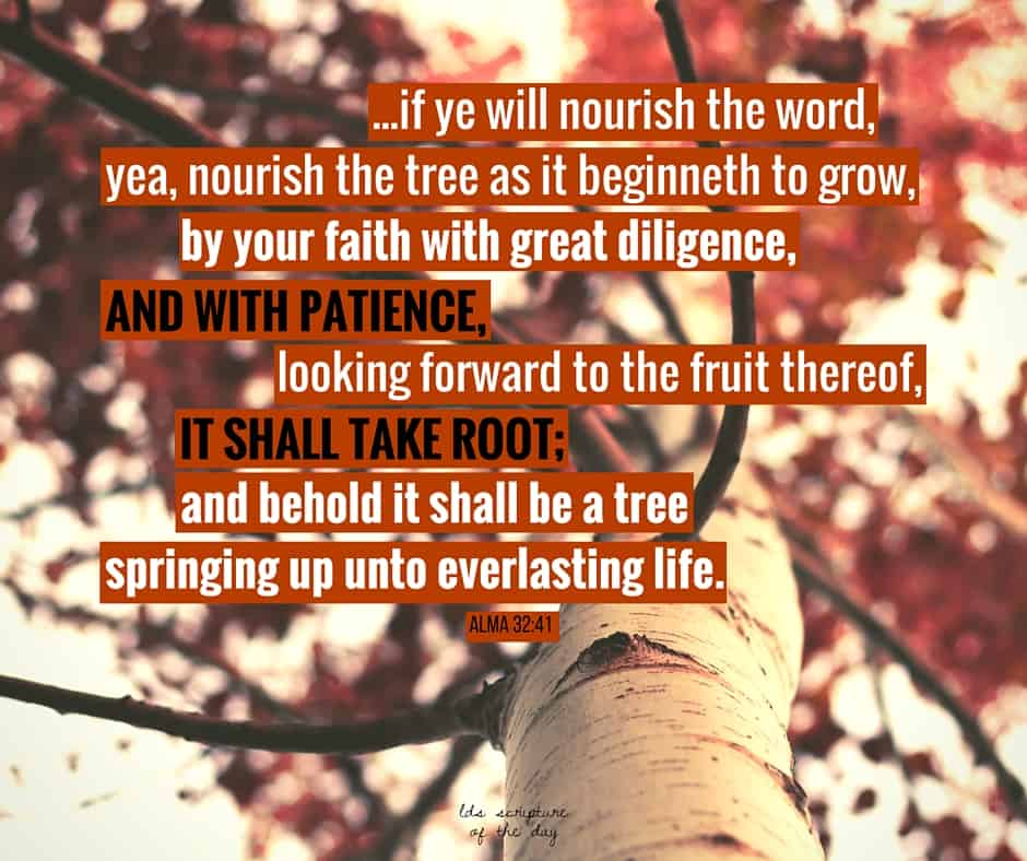 ...if ye will nourish the word, yea, nourish the tree as it beginneth to grow, by your faith with great diligence, and with patience, looking forward to the fruit thereof, it shall take root; and behold it shall be a tree springing up unto everlasting life. Alma 32:41