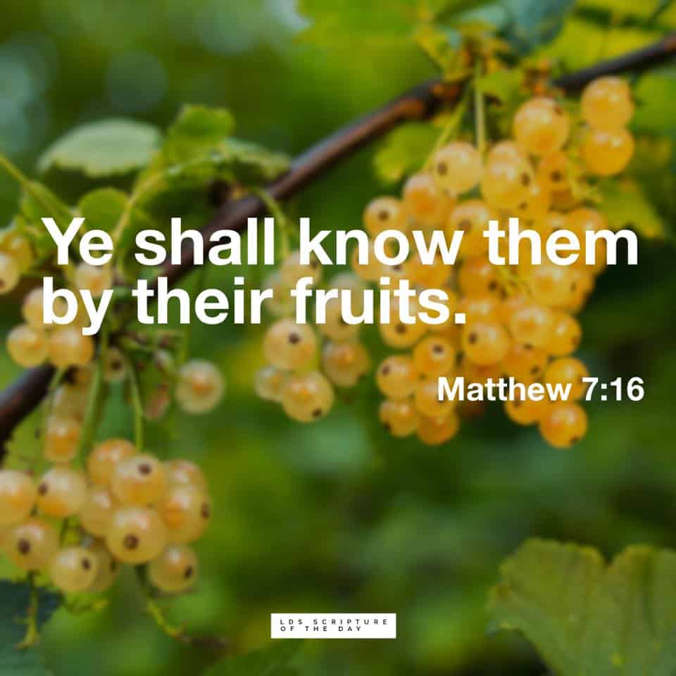 Ye shall know them by their fruits. Matthew 7:16