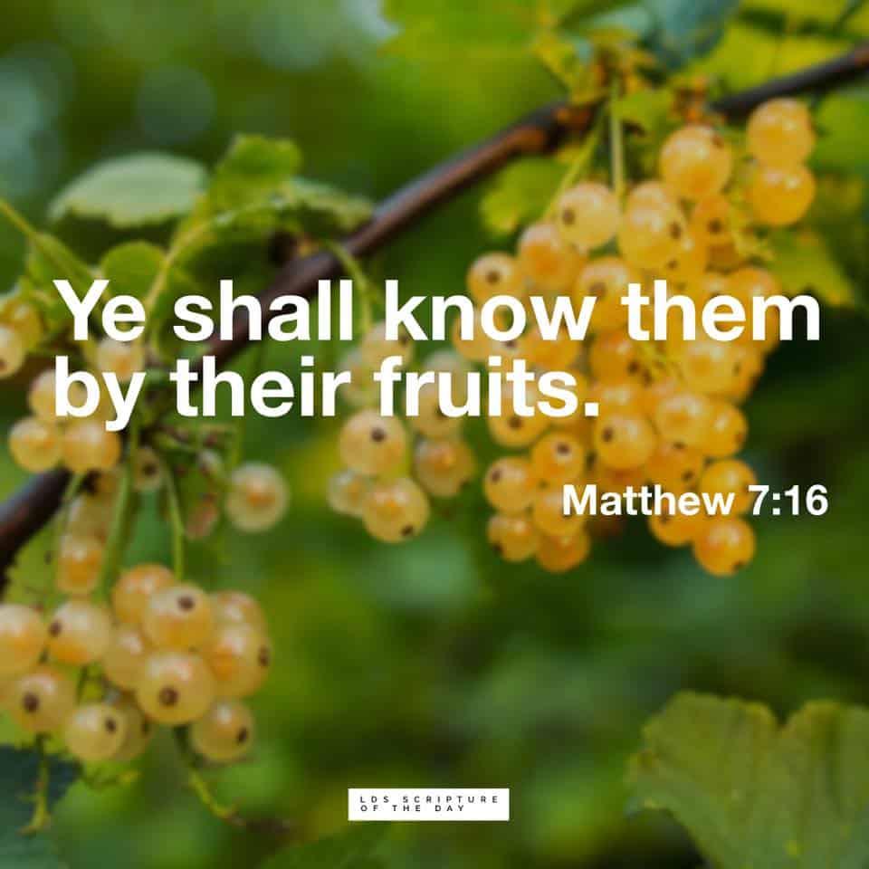 Matthew 7:16