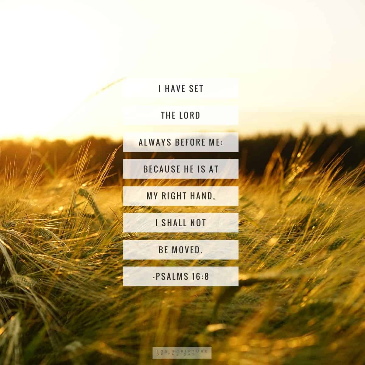 I have set the Lord always before me: because he is at my right hand, I shall not be moved. Psalms 16:8