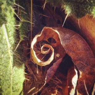 Golden spiral leaf