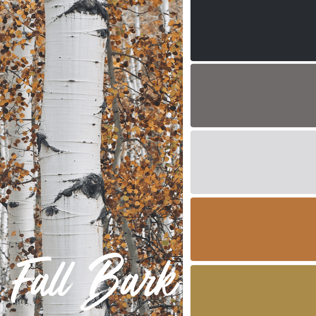 Fall Bark - 25 Fall Wedding Colors Any Bride & Groom Will Love
