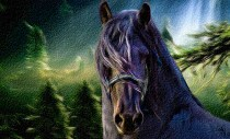 Friesian in forest