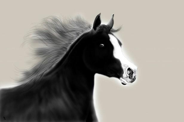 black stallion3
